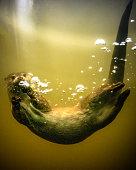 British river Otter