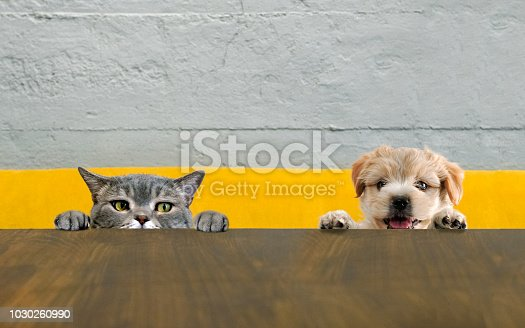 British shorthair cat and yorkshire terrier dog climbing on the top of the mushroom table