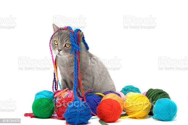 British shorthair cat is playing with colored wool skein picture id519134470?b=1&k=6&m=519134470&s=612x612&h=pb14ajlrho3i7p mv4lhykuoydydbhh9dtrqelnpjk0=