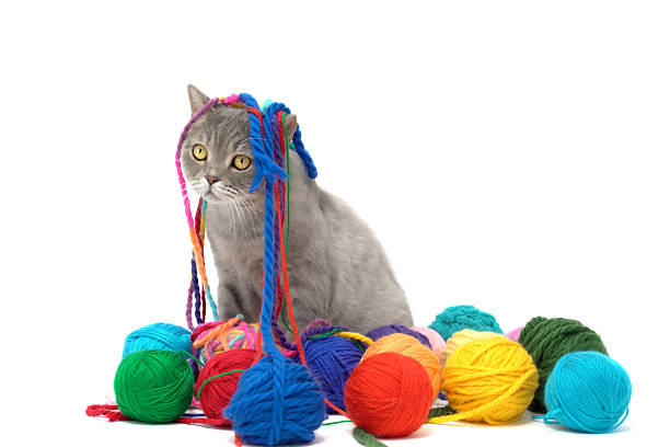 British shorthair cat is playing with colored wool skein picture id519134470?b=1&k=6&m=519134470&s=612x612&w=0&h=h3iiobqatto4gworvggtrdjlcye lhvpqoysagi0zve=