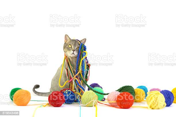 British shorthair cat is playing with colored wool skein picture id519343498?b=1&k=6&m=519343498&s=612x612&h=3abpuedip7km8r86lrxd ofghy1vyhkp9b535sfg1va=