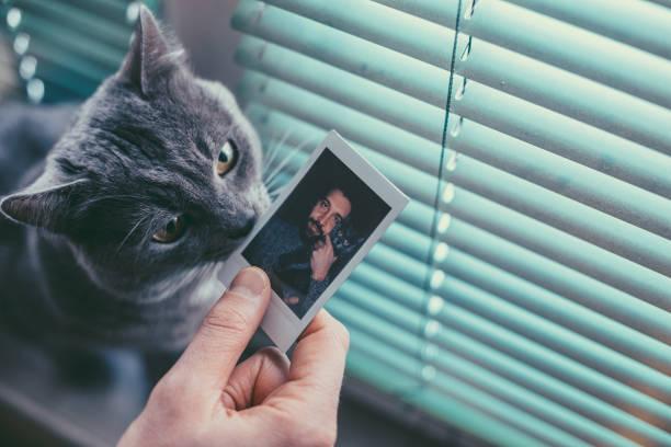 British shorthair cat picture id1148372821?b=1&k=6&m=1148372821&s=612x612&w=0&h=n1p9phkpyexf0v3ihj5ryxzsocfskz18ltyftyq3yy0=
