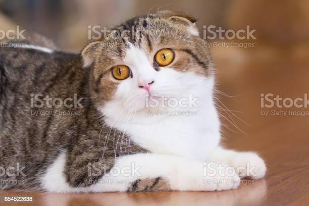 British shorthair cat picture id654522638?b=1&k=6&m=654522638&s=612x612&h=gtdvdbfjodzfmsrcr6o3xkd0zrcdf1sbtehc4wodljk=