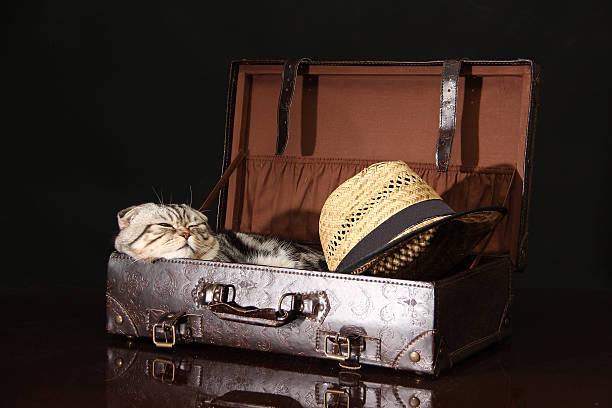 British shorthair kitten picture id516448738?b=1&k=6&m=516448738&s=612x612&w=0&h=qzyqxopu8lni0fmjgsldmgth5ijmqa8uk2pbzabpd m=