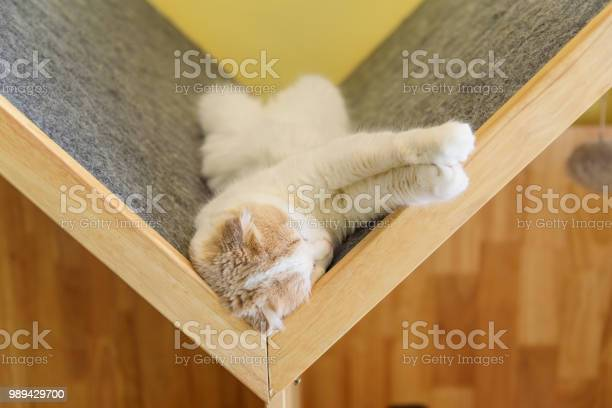 British shorthair sleeping on wood plate picture id989429700?b=1&k=6&m=989429700&s=612x612&h=cfl7bbtxq4ke0s49res8inj1oy4rx4enadznxl9ibuk=