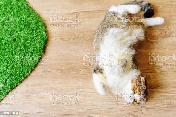 British shorthair sleeping on wood plate picture id989430034?b=1&k=6&m=989430034&s=612x612&h=ce kqpxs3gvytk7mnrkiuhmszp1hobgxz2z 6g5gmys=