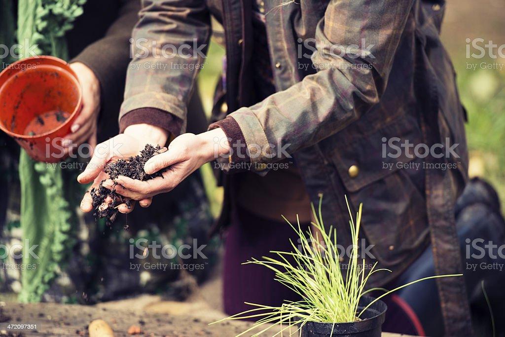 British Women Getting Hands Dirty in the Garden stock photo