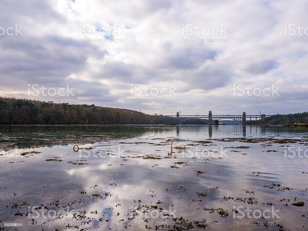 Brittania Bridge and the Swellies Mute Swan Landscape stock photo