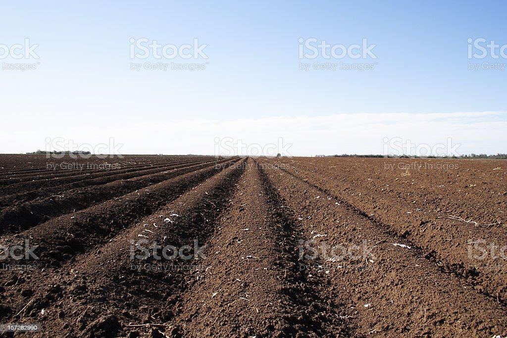 broad acre cotton farming royalty-free stock photo