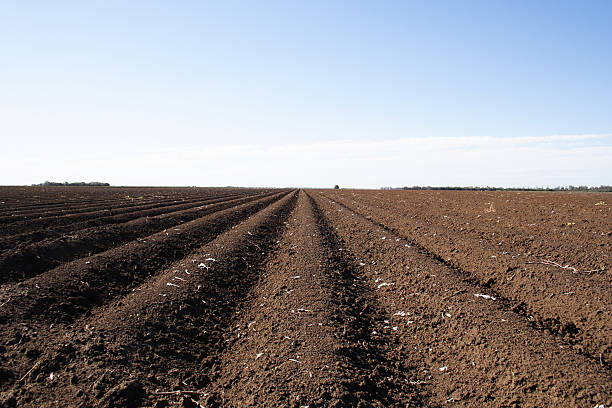 broad acre cotton farming stock photo