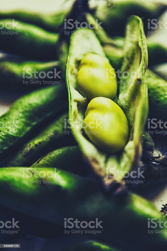 Broad Bean or Fava Bean stock photo