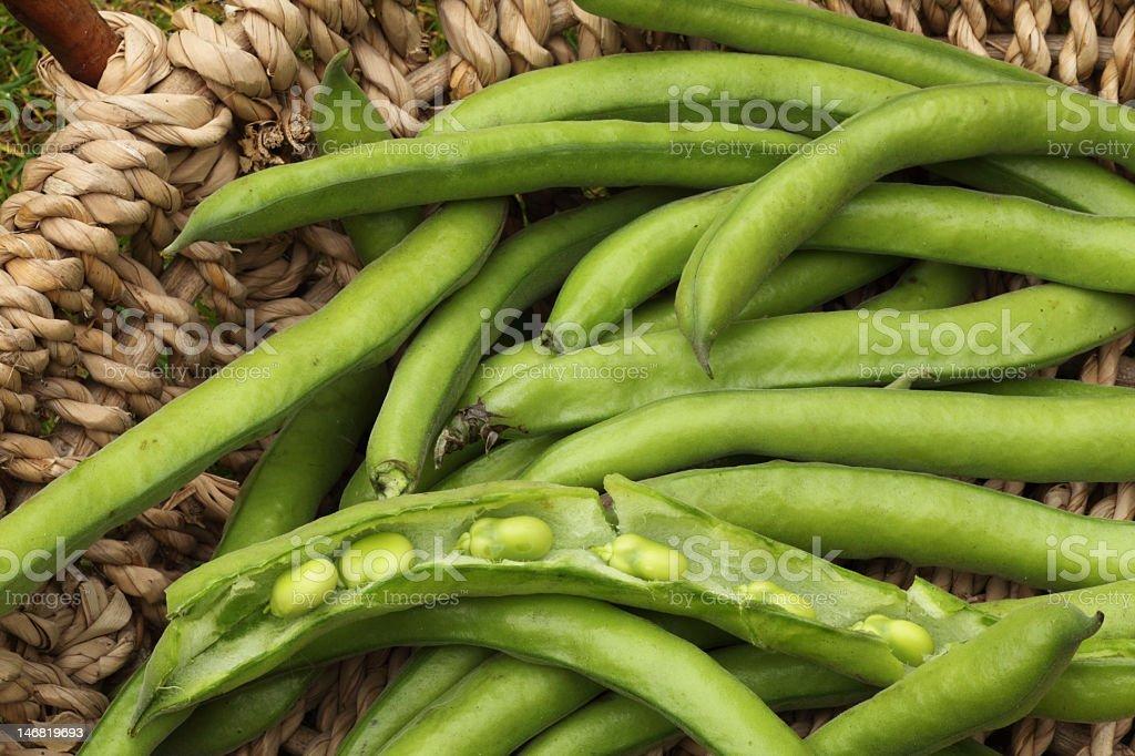 Broad bean pods stock photo