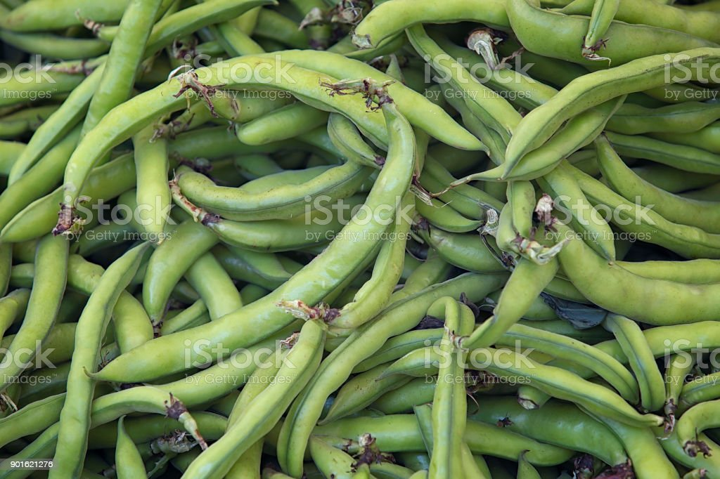 Broad beans (Vicia faba var. major) in pods stock photo