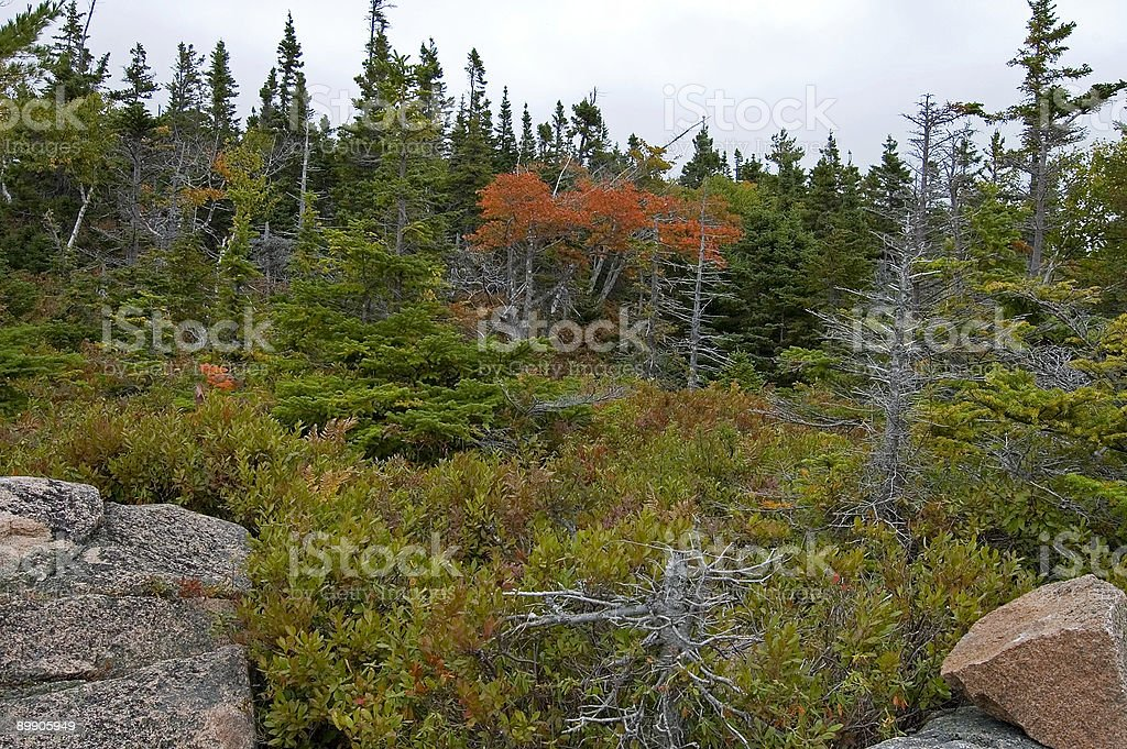 Broad Cove Mtn, Cape Breton Highlands NP, NS royalty-free stock photo