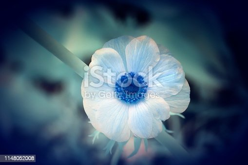 A vibrant blue center surrounded by blue tinted petals