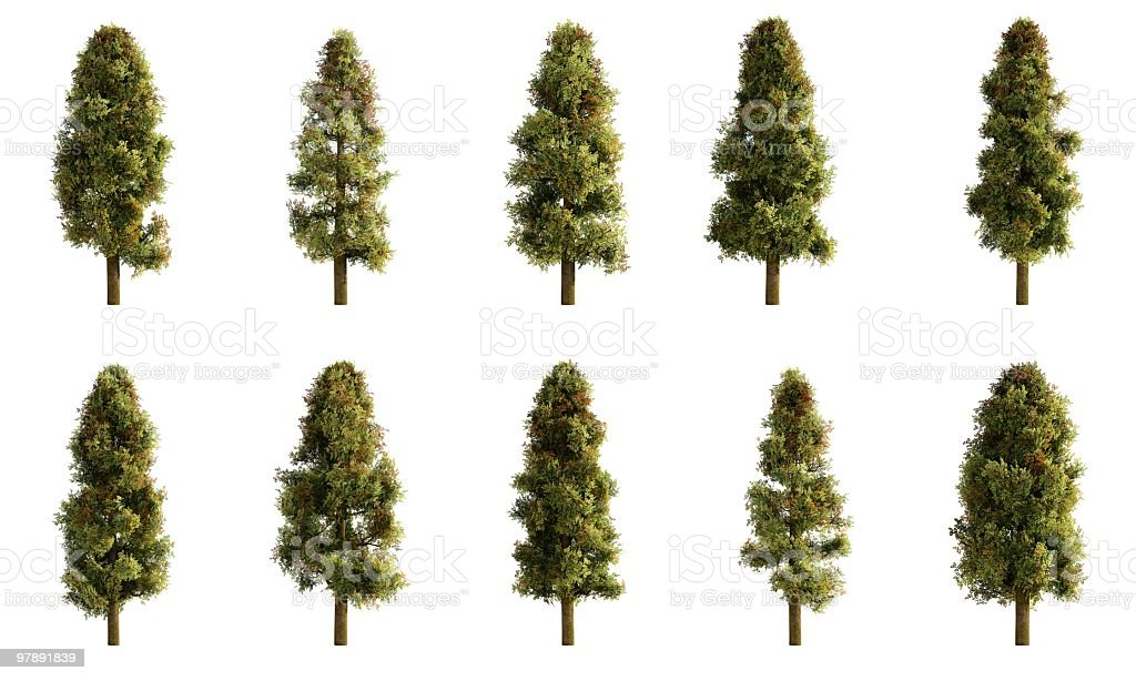 Broad Leaf Tree Collection royalty-free stock photo