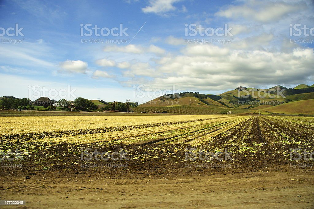 Broccoli Fields in California Valley stock photo