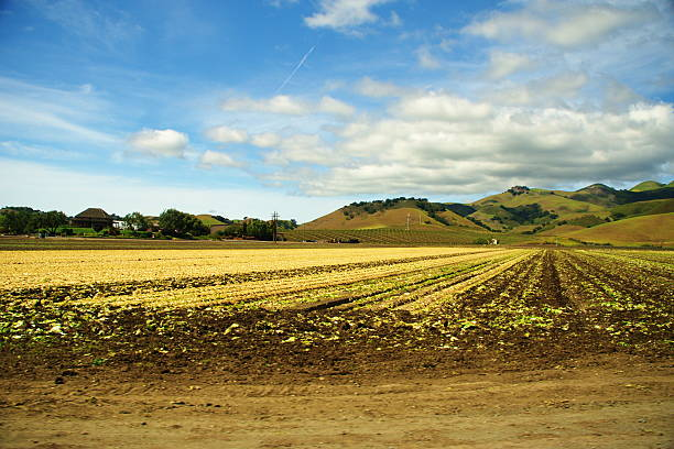 Broccoli Fields in California Valley stock photo