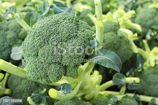 Broccoli fresh from the farm