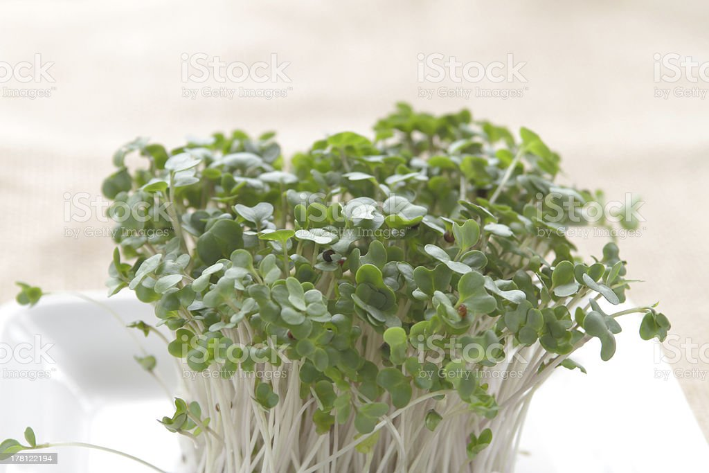 Broccoli sprouts on white plate stock photo