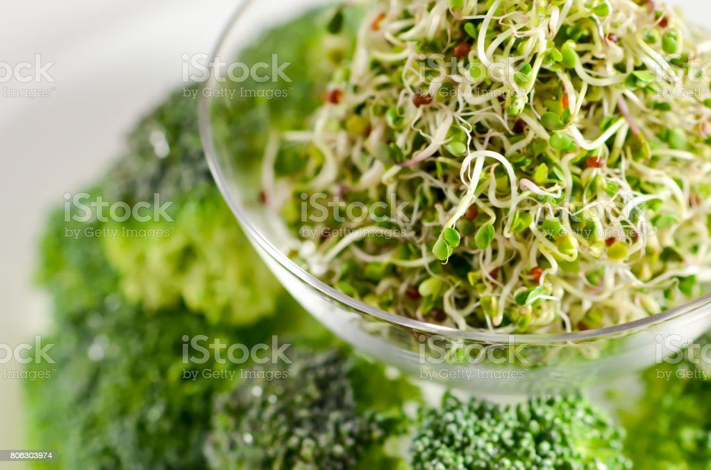 Broccoli sprouts stock photo