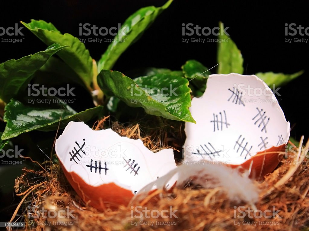Broke Eggs on a nest, with count marks. royalty-free stock photo