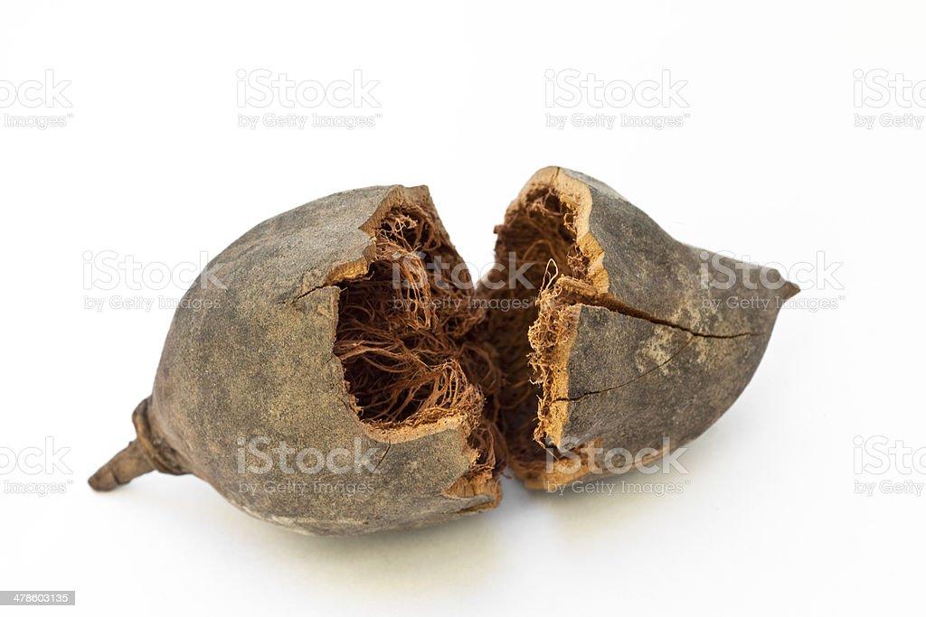 Broken Baobab fruit stock photo