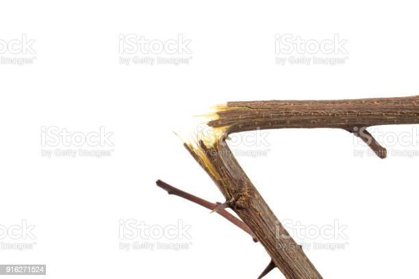 Photo of broken branch on white