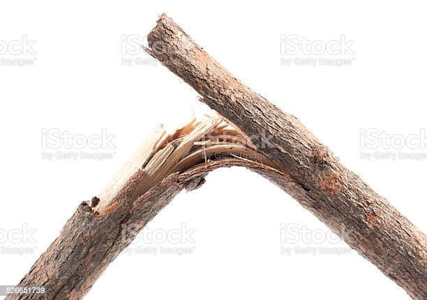 Photo of Broken Branches