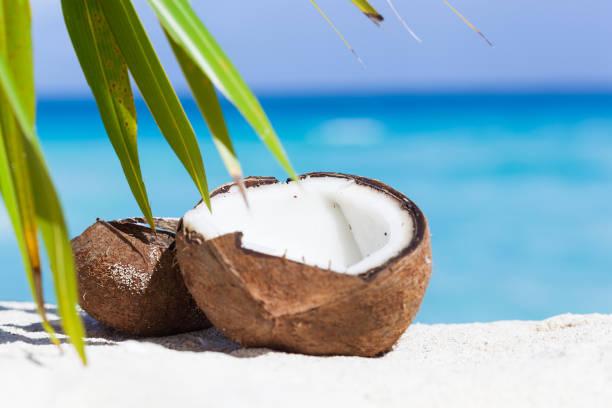Broken brown coconut on sandy beach stock photo
