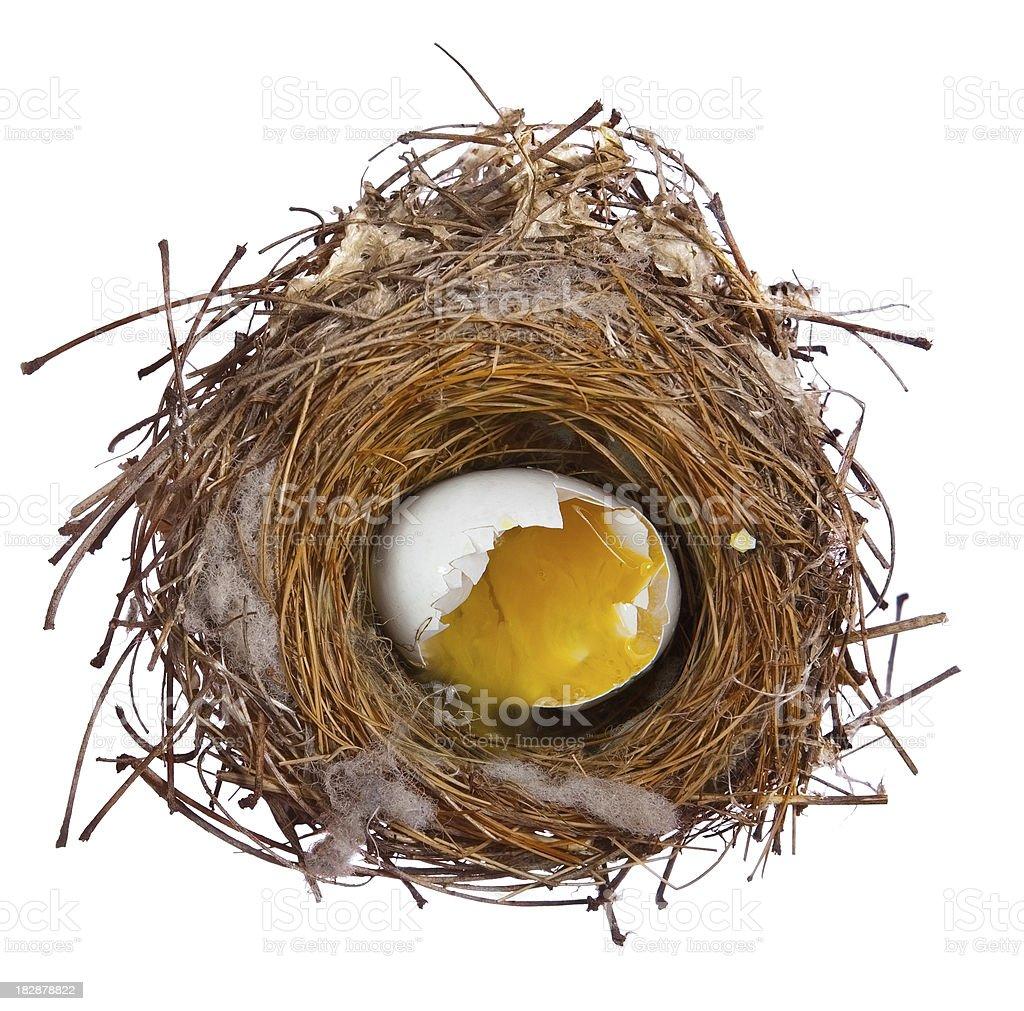 broken egg  in nest royalty-free stock photo