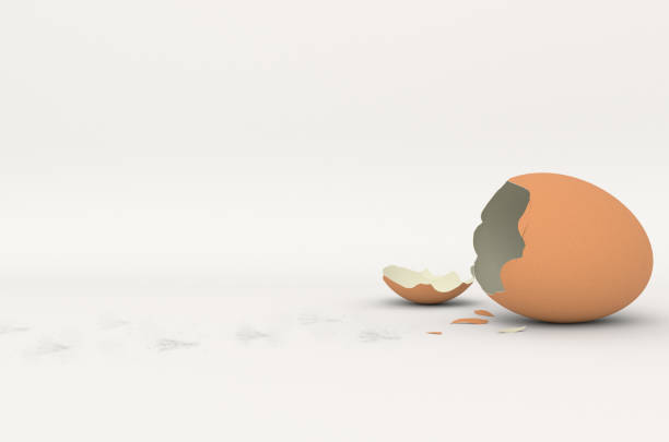 broken eggshell with chick foot prints stock photo
