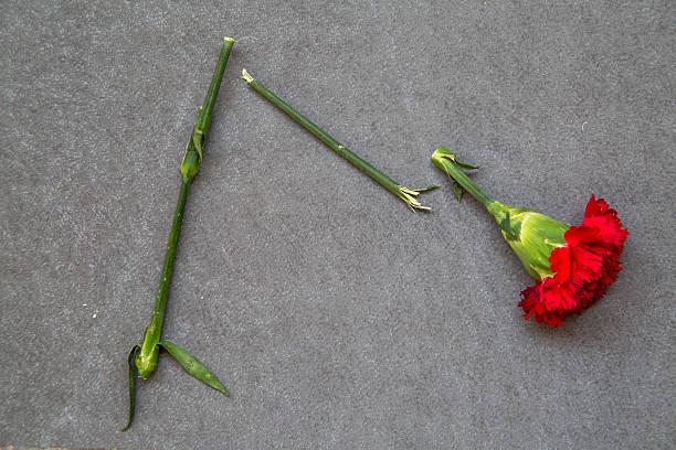 broken flower abandoned on ground stock photo