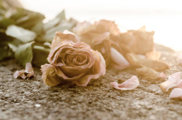 A broken heart shown with roses stock photo
