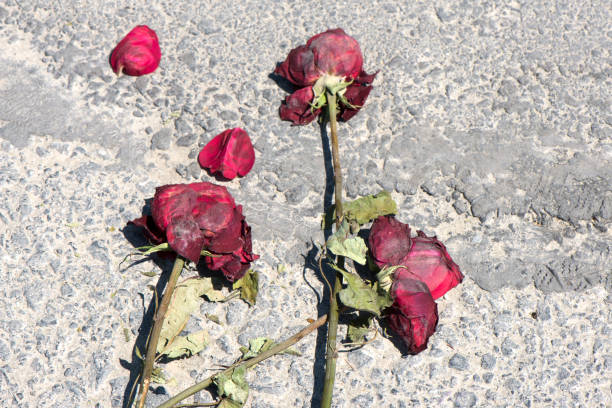 Broken Heart, Wilted Roses On The Road stock photo