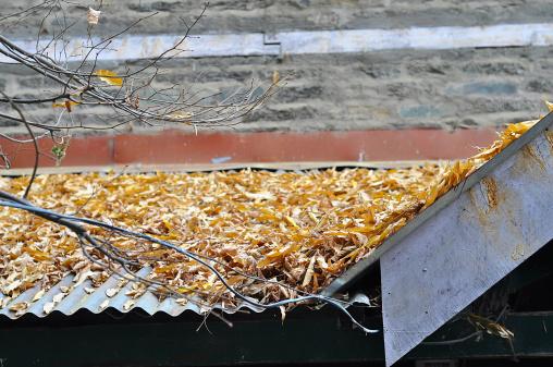 more broken leaves in roof.