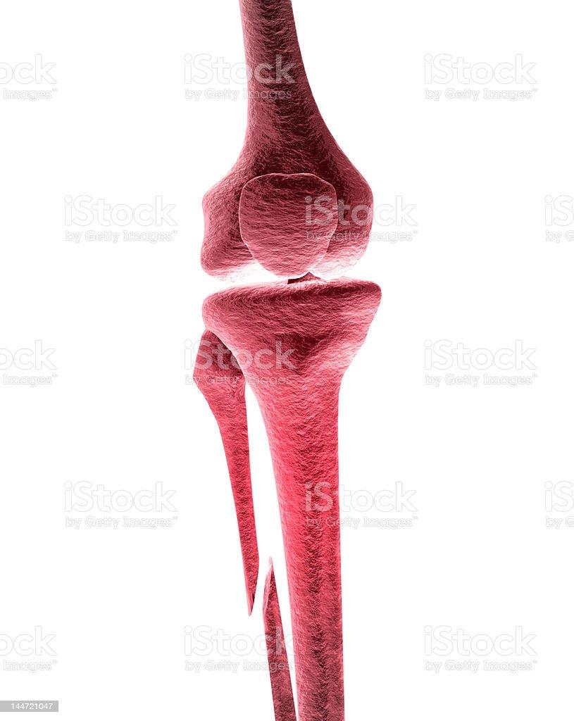 Broken Leg Pain Broken human leg with pain Anatomy Stock Photo