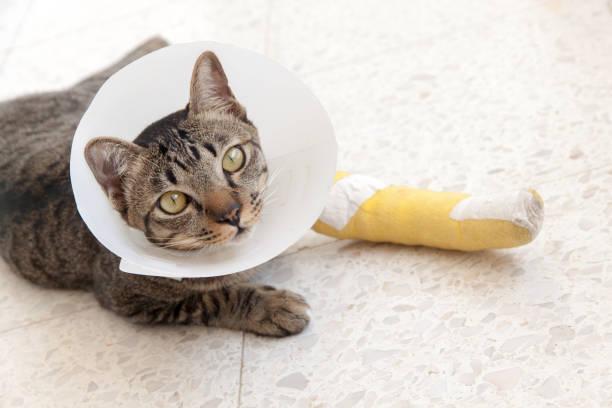 broken leg splint cat stock photo