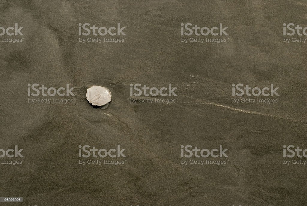 Broken Sand Dollar on Beach royalty-free stock photo