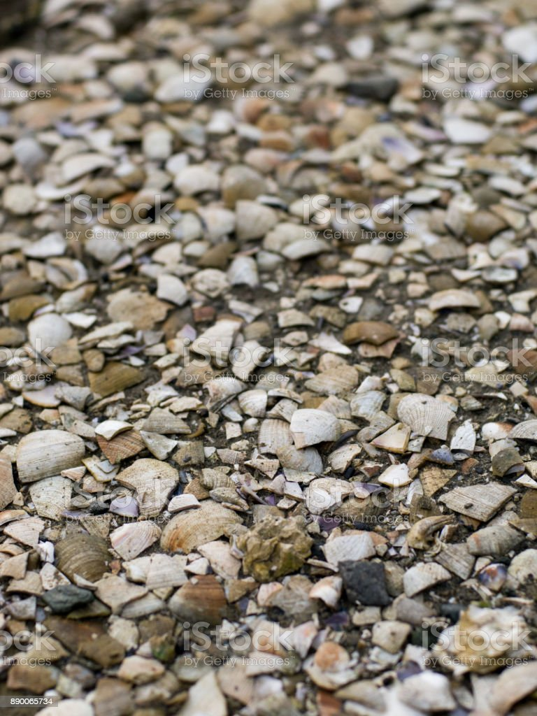 broken seashells covering the ground stock photo