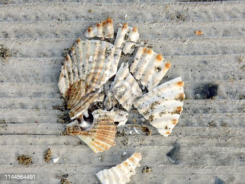 Broken shells on the planks of the boardwalk on the beach