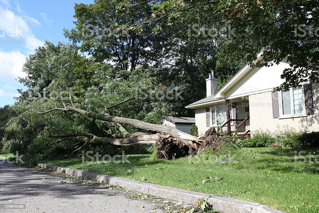 Broken tree after heavy thunderstorm stock photo