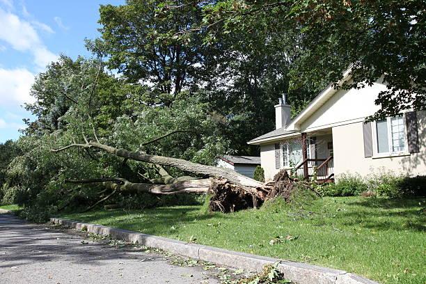 Broken tree nach Schwere Gewitter – Foto