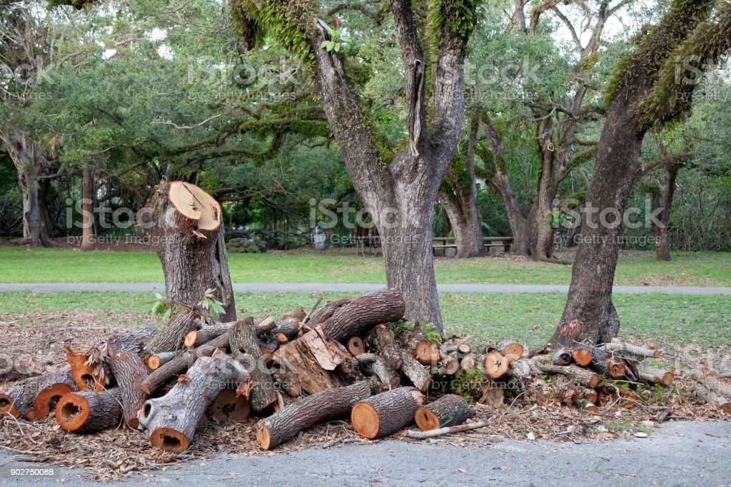Gebrochenen Baum nach dem Hurrikan in den Park. Big Tree ist für Brennholz gesägt. – Foto