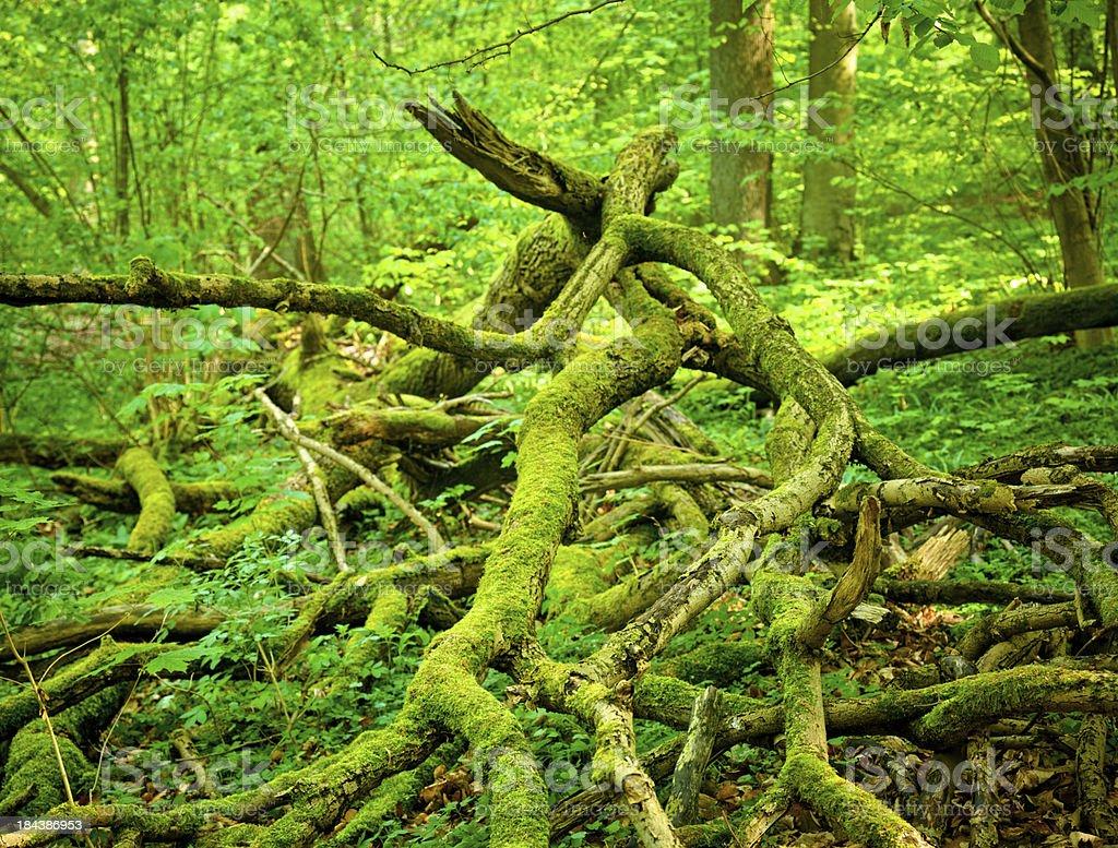 broken tree branch royalty-free stock photo
