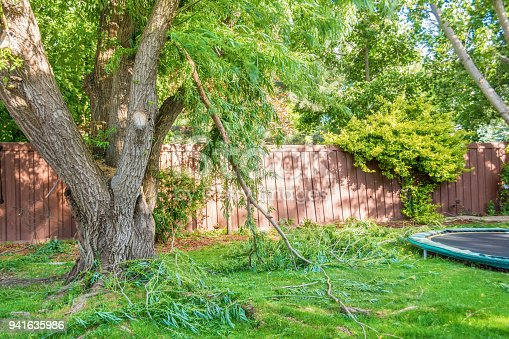 Large willow tree in a backyard with several broken branches from a wind storm. Green lawn, back fence, landscaping, trampoline, and sunny calm day after the storm.