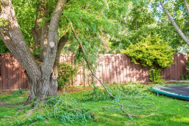 Broken Tree Branch stock photo