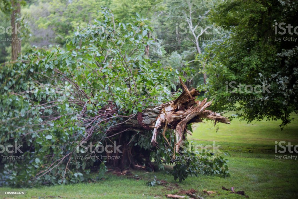 Broken tree branches and trees after a hurricane in the park