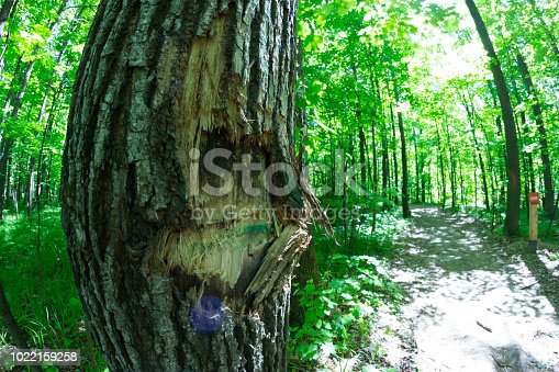 Broken tree in the forest. environmental concept