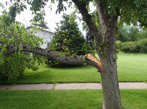 Broken tree limb from storm damage